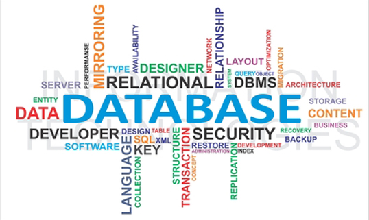 Database Web Design